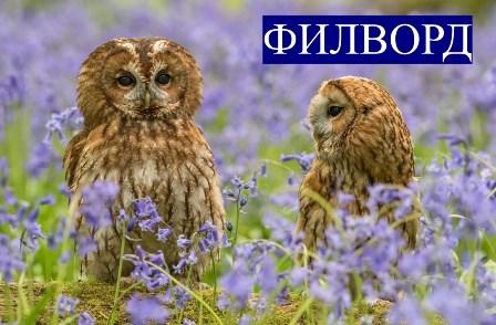 ЦДОДиМ &laquoМаяк&raquo